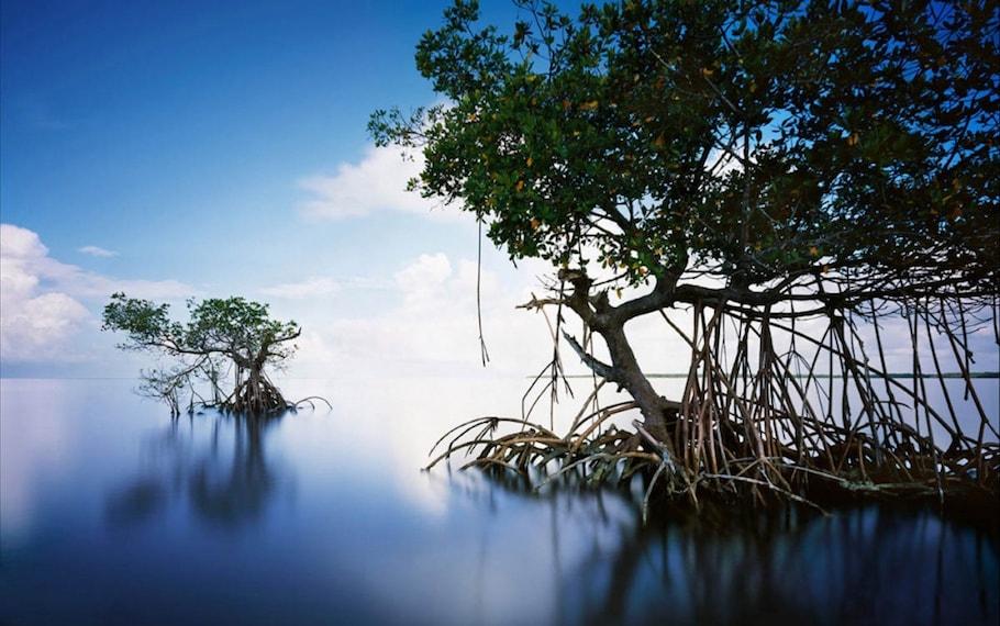 Everglade Park, Florida, Usa