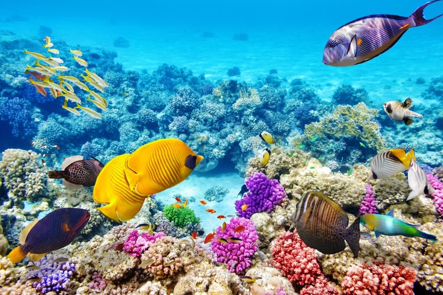 Great Coral Barrier