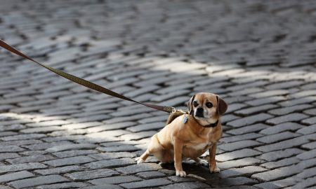 Stop Dog Pull Leash